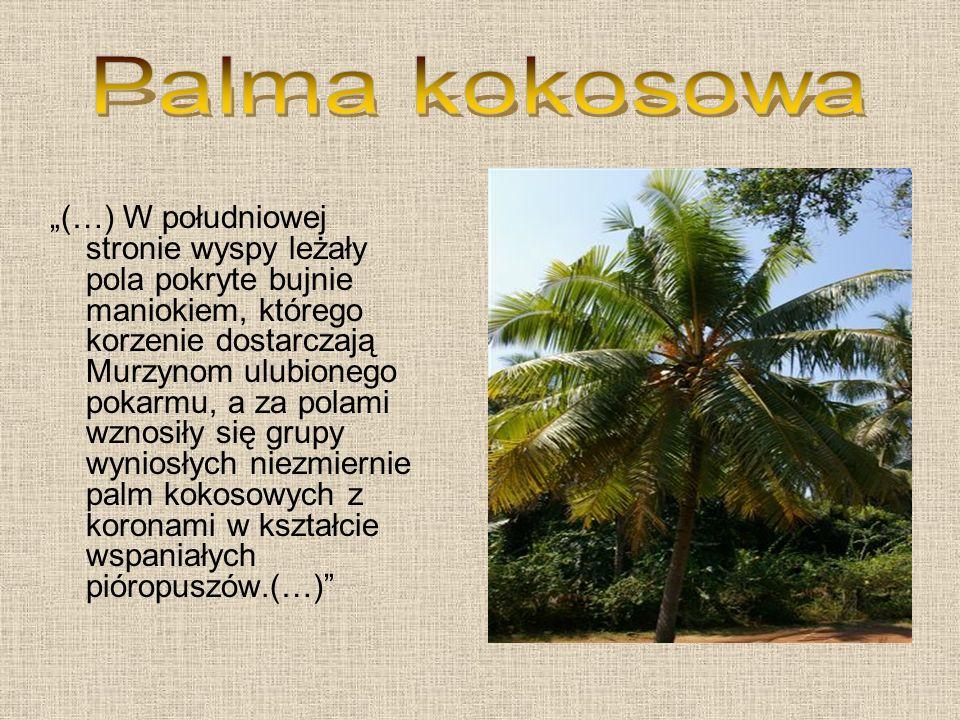 (…) W południowej stronie wyspy leżały pola pokryte bujnie maniokiem, którego korzenie dostarczają Murzynom ulubionego pokarmu, a za polami wznosiły się grupy wyniosłych niezmiernie palm kokosowych z koronami w kształcie wspaniałych pióropuszów.(…)