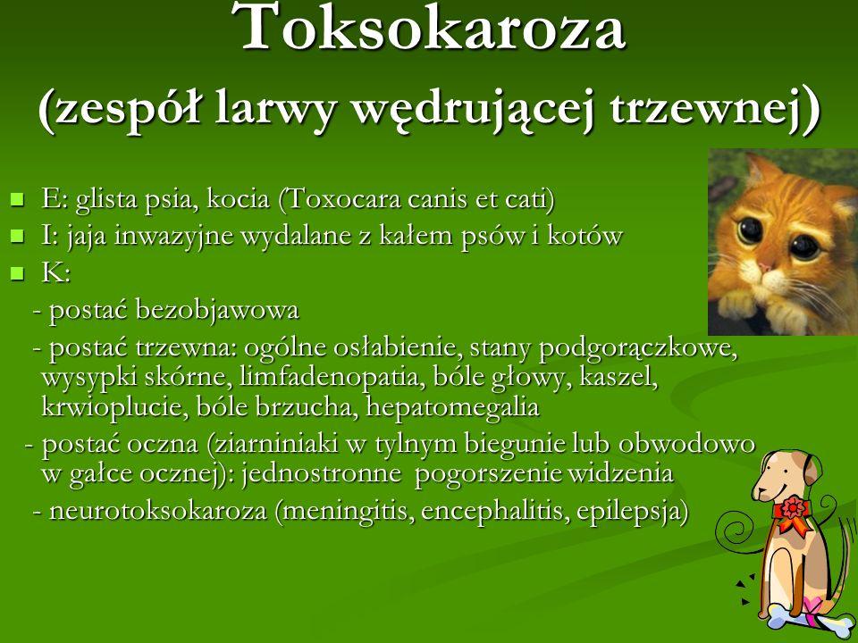 Toksokaroza (zespół larwy wędrującej trzewnej ) E: glista psia, kocia (Toxocara canis et cati) E: glista psia, kocia (Toxocara canis et cati) I: jaja