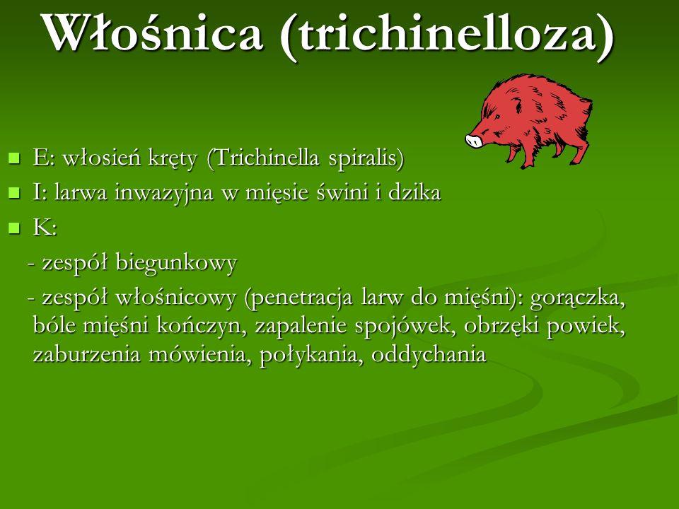 Włośnica (trichinelloza) E: włosień kręty (Trichinella spiralis) E: włosień kręty (Trichinella spiralis) I: larwa inwazyjna w mięsie świni i dzika I: