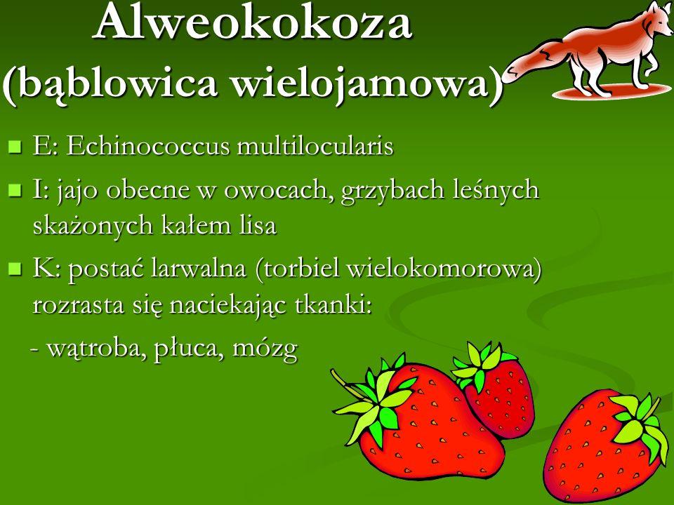 Alweokokoza (bąblowica wielojamowa) E: Echinococcus multilocularis E: Echinococcus multilocularis I: jajo obecne w owocach, grzybach leśnych skażonych