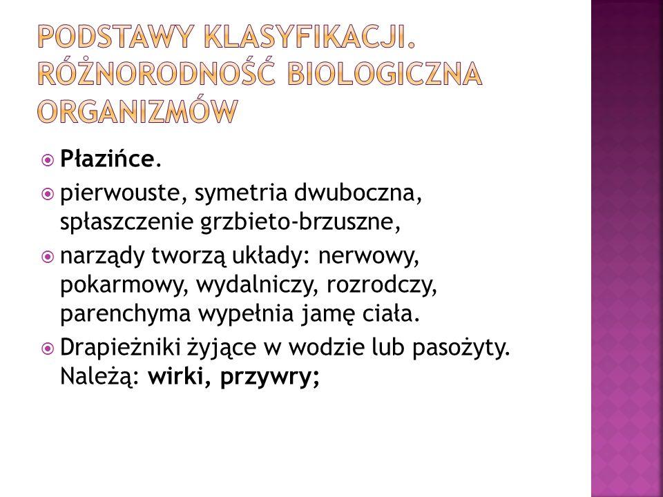 Płazińce. pierwouste, symetria dwuboczna, spłaszczenie grzbieto-brzuszne, narządy tworzą układy: nerwowy, pokarmowy, wydalniczy, rozrodczy, parenchyma