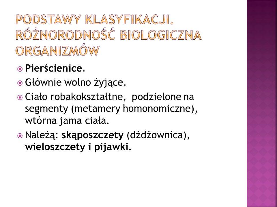 Pierścienice. Głównie wolno żyjące. Ciało robakokształtne, podzielone na segmenty (metamery homonomiczne), wtórna jama ciała. Należą: skąposzczety (dż
