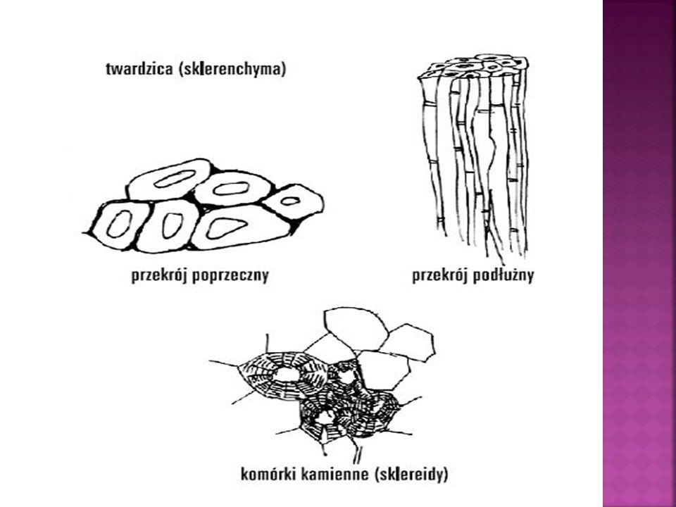 SKŁADNIKI KOMÓRKI: Makroelementy (ok.