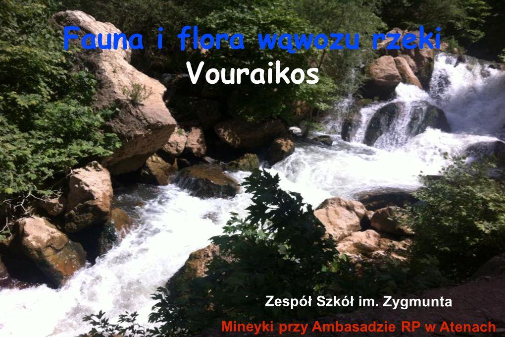 Fauna i flora wąwozu rzeki Vouraikos Zespół Szkół im. Zygmunta Mineyki przy Ambasadzie RP w Atenach