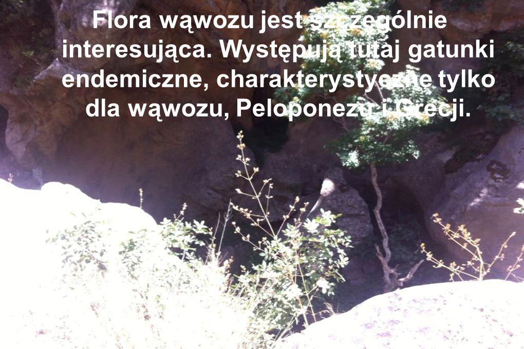 Flora wąwozu jest szczególnie interesująca. Występują tutaj gatunki endemiczne, charakterystyczne tylko dla wąwozu, Peloponezu i Grecji.