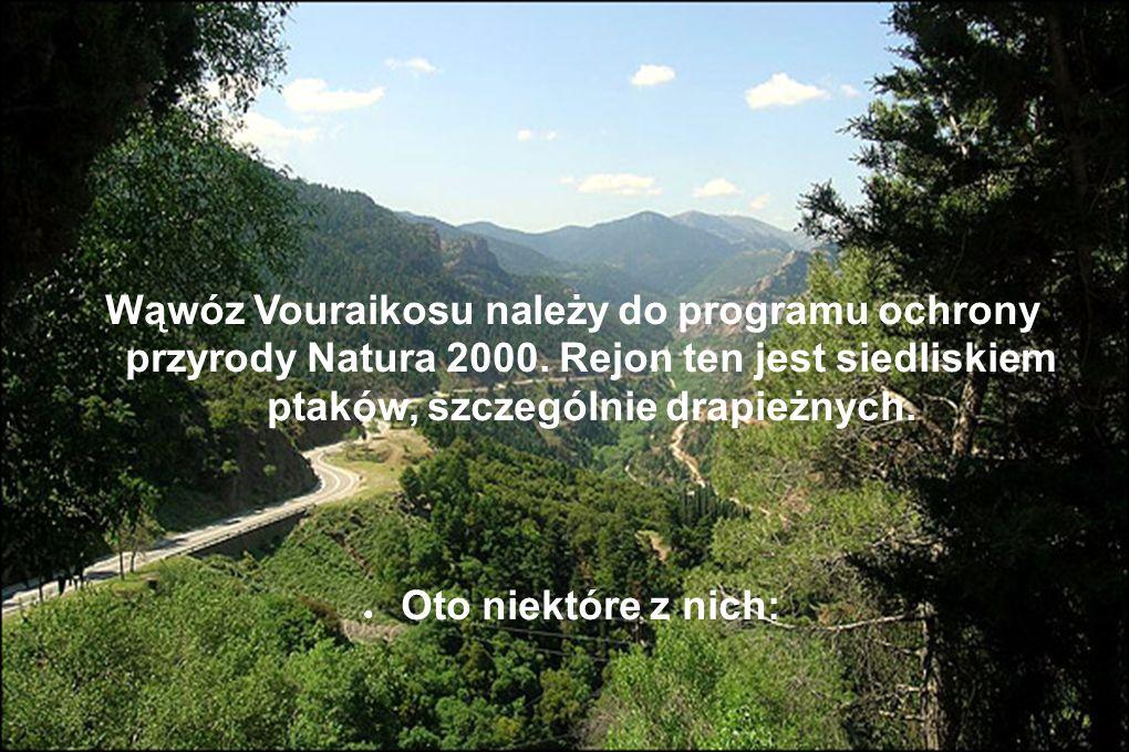 Wąwóz Vouraikosu należy do programu ochrony przyrody Natura 2000. Rejon ten jest siedliskiem ptaków, szczególnie drapieżnych. Oto niektóre z nich:
