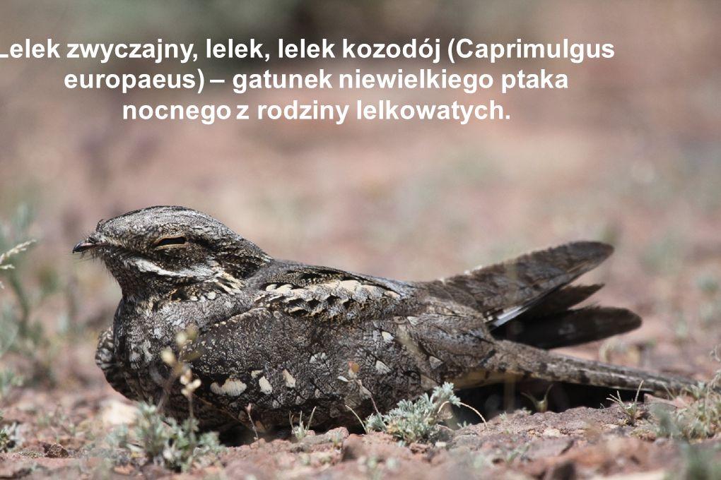 Inne obszary okolic Kalavrity należące do systemu Natura 2000: - Jezioro Tsivlou – 800m npm - Helmos – 2 355m npm - Erymanthos – 2 224m npm - Park krajobrazowy - Gaj Niezawisłości Narodowej