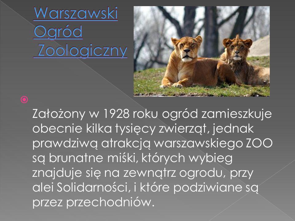 Założony w 1928 roku ogród zamieszkuje obecnie kilka tysięcy zwierząt, jednak prawdziwą atrakcją warszawskiego ZOO są brunatne miśki, których wybieg z