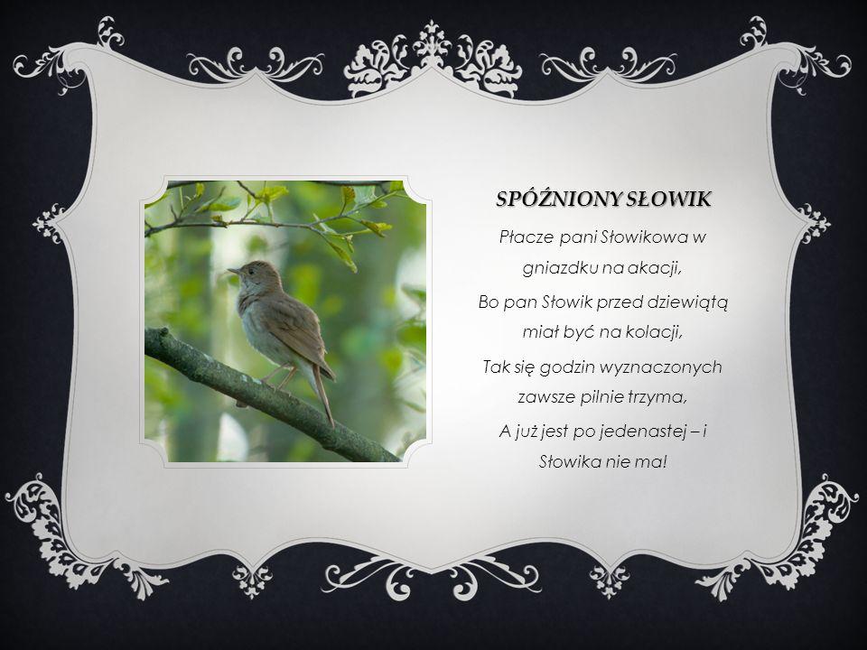 SPÓŹNIONY SŁOWIK Płacze pani Słowikowa w gniazdku na akacji, Bo pan Słowik przed dziewiątą miał być na kolacji, Tak się godzin wyznaczonych zawsze pil