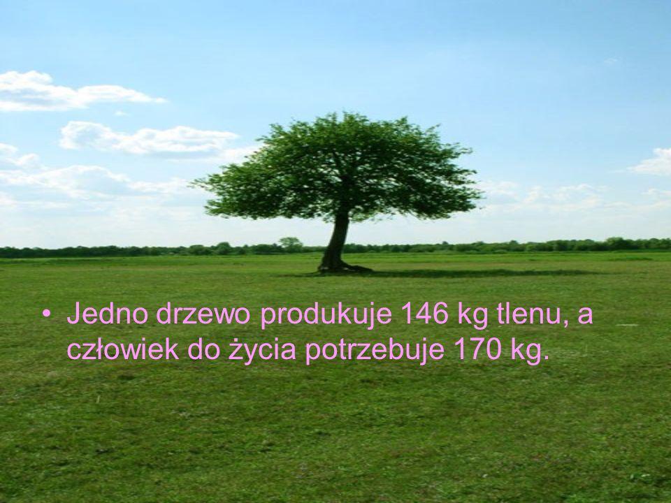 Jedno drzewo produkuje 146 kg tlenu, a człowiek do życia potrzebuje 170 kg.