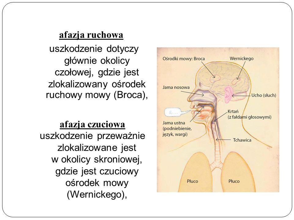 afazja ruchowa uszkodzenie dotyczy głównie okolicy czołowej, gdzie jest zlokalizowany ośrodek ruchowy mowy (Broca), afazja czuciowa uszkodzenie przeważnie zlokalizowane jest w okolicy skroniowej, gdzie jest czuciowy ośrodek mowy (Wernickego),