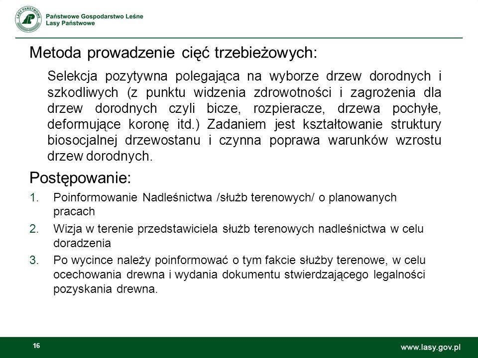16 Metoda prowadzenie cięć trzebieżowych: Selekcja pozytywna polegająca na wyborze drzew dorodnych i szkodliwych (z punktu widzenia zdrowotności i zag
