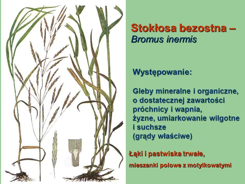 Stokłosa bezostna – Bromus inermis Łąki i pastwiska trwałe, mieszanki polowe z motylkowatymi Występowanie: Gleby mineralne i organiczne, o dostateczne