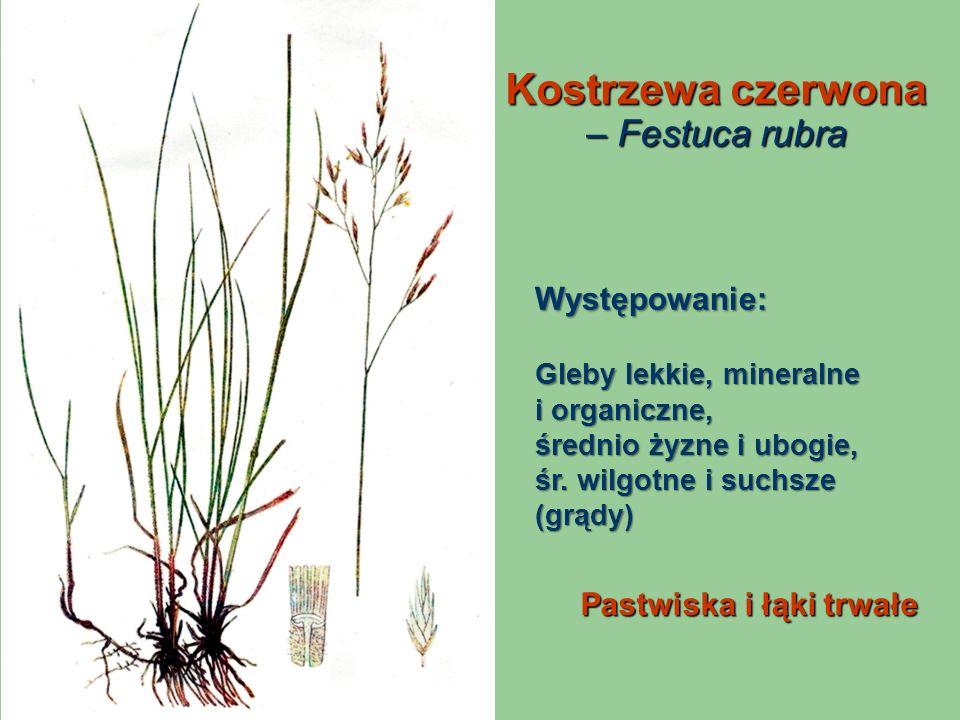 Kostrzewa czerwona – Festuca rubra Pastwiska i łąki trwałe Występowanie: Gleby lekkie, mineralne i organiczne, średnio żyzne i ubogie, śr. wilgotne i