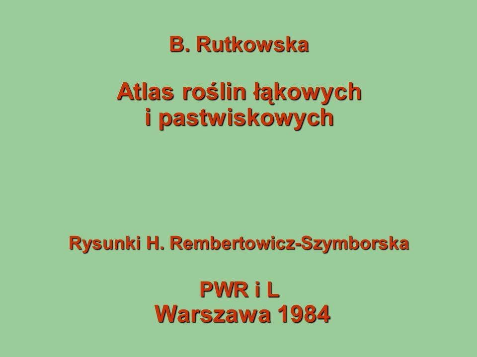 B. Rutkowska Atlas roślin łąkowych i pastwiskowych Rysunki H. Rembertowicz-Szymborska PWR i L Warszawa 1984