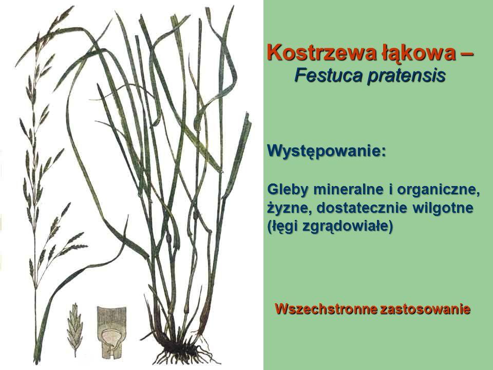 Kostrzewa łąkowa – Festuca pratensis Wszechstronne zastosowanie Występowanie: Gleby mineralne i organiczne, żyzne, dostatecznie wilgotne (łęgi zgrądow