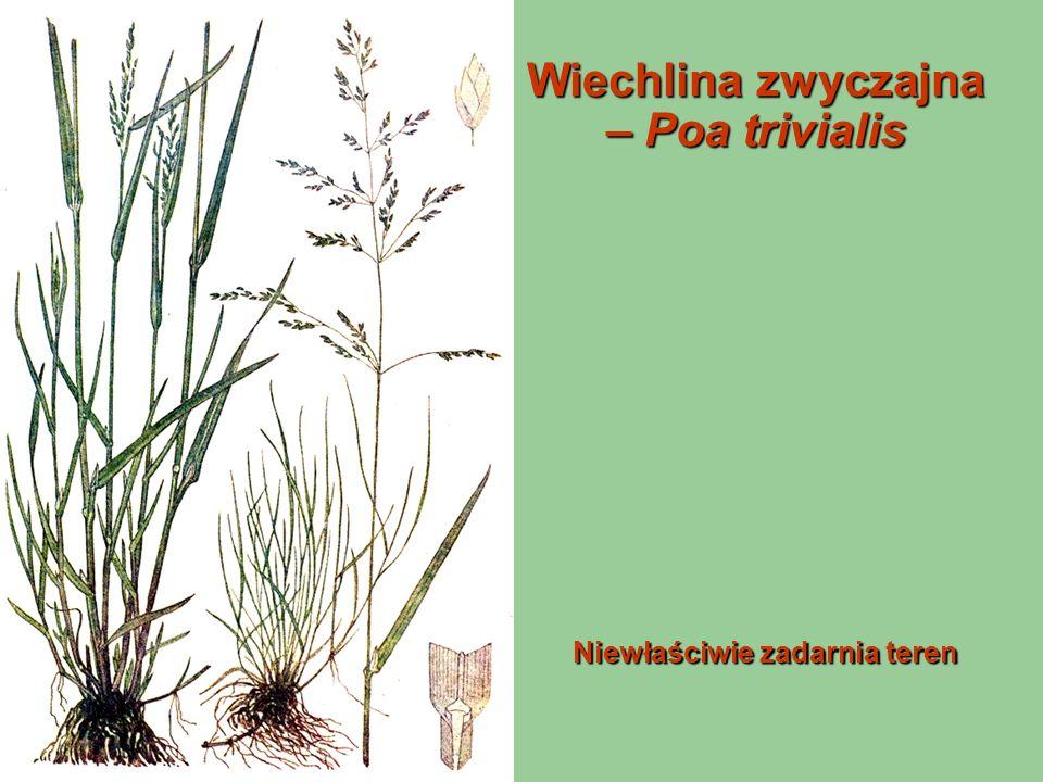 Trawy małej i bardzo małej wartości (w kolejności od stanowisk wilgotnych do posusznych)