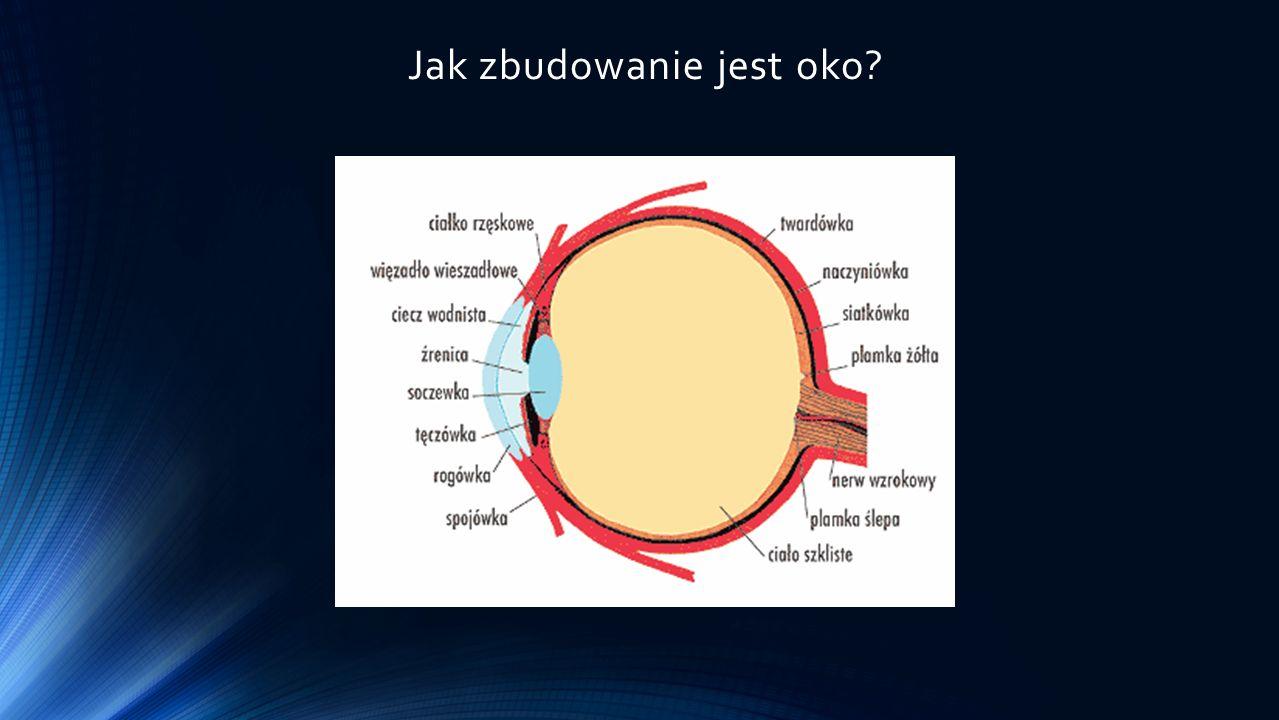 Jak zbudowanie jest oko?