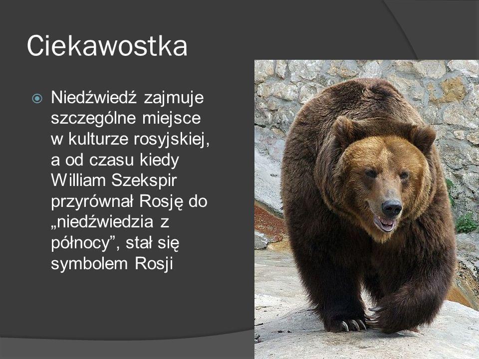 Ciekawostka Niedźwiedź zajmuje szczególne miejsce w kulturze rosyjskiej, a od czasu kiedy William Szekspir przyrównał Rosję do niedźwiedzia z północy, stał się symbolem Rosji