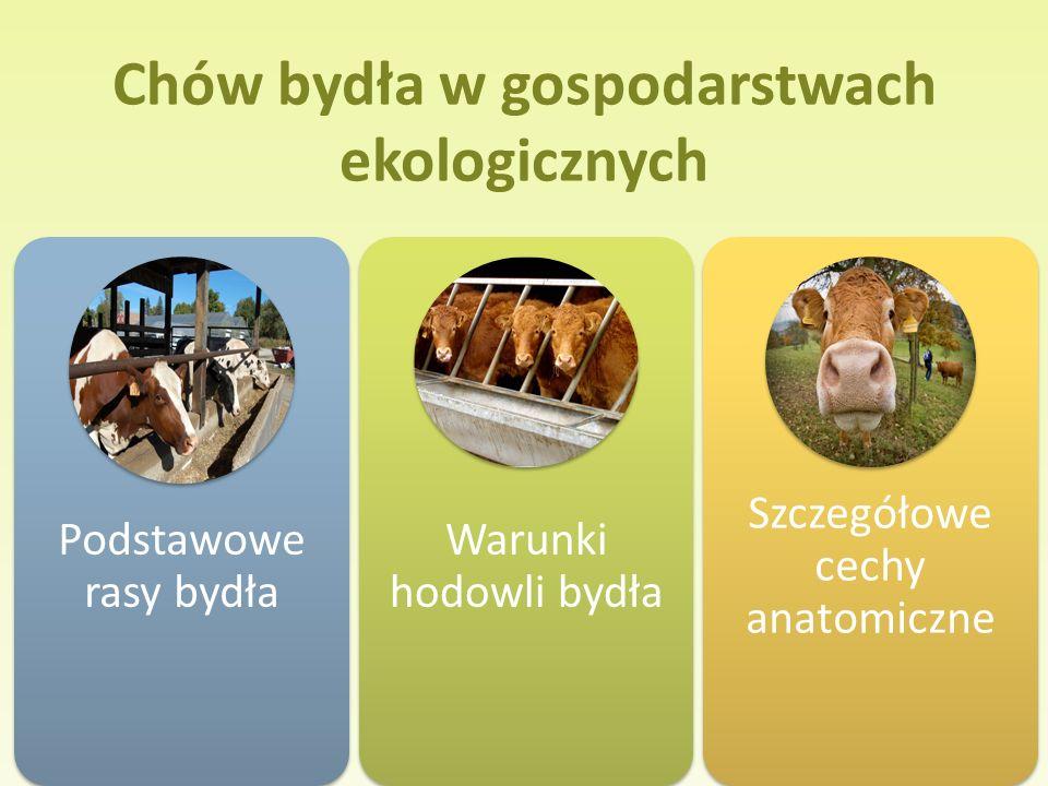 Poradnik Podstawowe rasy bydła Warunki hodowli bydła Szczegółowe cechy anatomiczne Chów bydła w gospodarstwach ekologicznych
