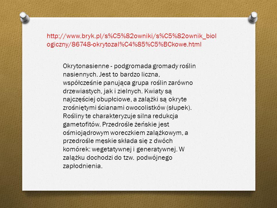 http://portalwiedzy.onet.pl/encyklopedia.html Okrytozalążkowe, okrytonasienne (Angiospermae), typ królestwa roślin, liczący ok. 300 tys. gatunków drze