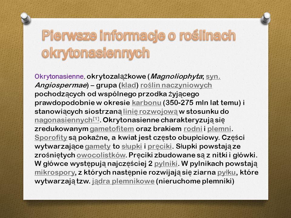 Okrytonasienne, okrytozal ąż kowe (Magnoliophyta; syn.