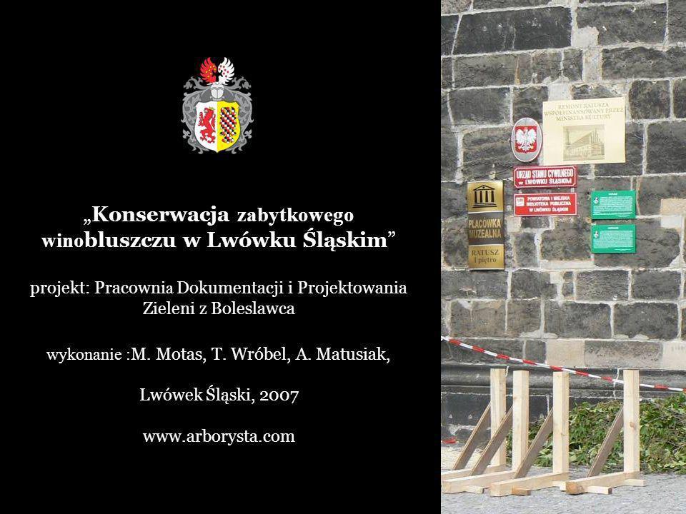 Konserwacja zabytkowego wino bluszczu w Lwówku Śląskim projekt: Pracowni a Dokumentacji i Projektowania Zieleni z Boleslawca wykonanie : M.