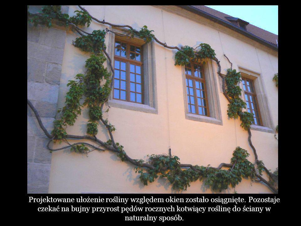 Projektowane ułożenie rośliny względem okien zostało osiągnięte.