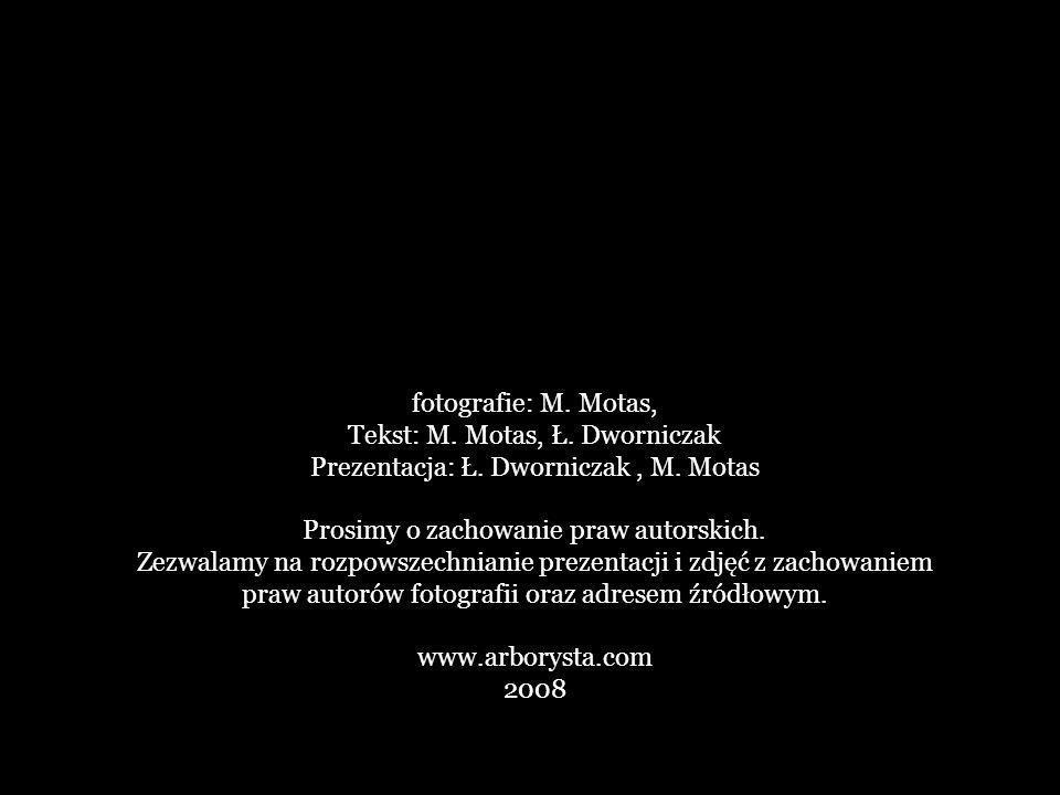 fotografie: M.Motas, Tekst: M. Motas, Ł. Dworniczak Prezentacja: Ł.