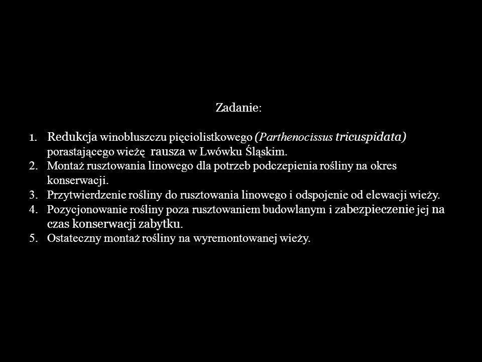 Zadanie : 1.Redukcja winobluszczu pięciolistkowego ( Parthenocissus tricuspidata) porastającego wieżę rausza w Lwówku Śląskim.