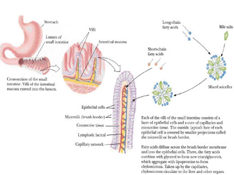 Leki i toksyny będące najczęstszą przyczyną nudności i wymiotów Cytostatyki i immunosupresyjne np.
