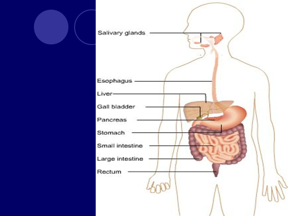 Podstawowe funkcje przewodu pokarmowego Produkcja soku żołądkowego Wymioty Perystaltyka jelit i usuwanie kału Synteza i uwalnianie żółci
