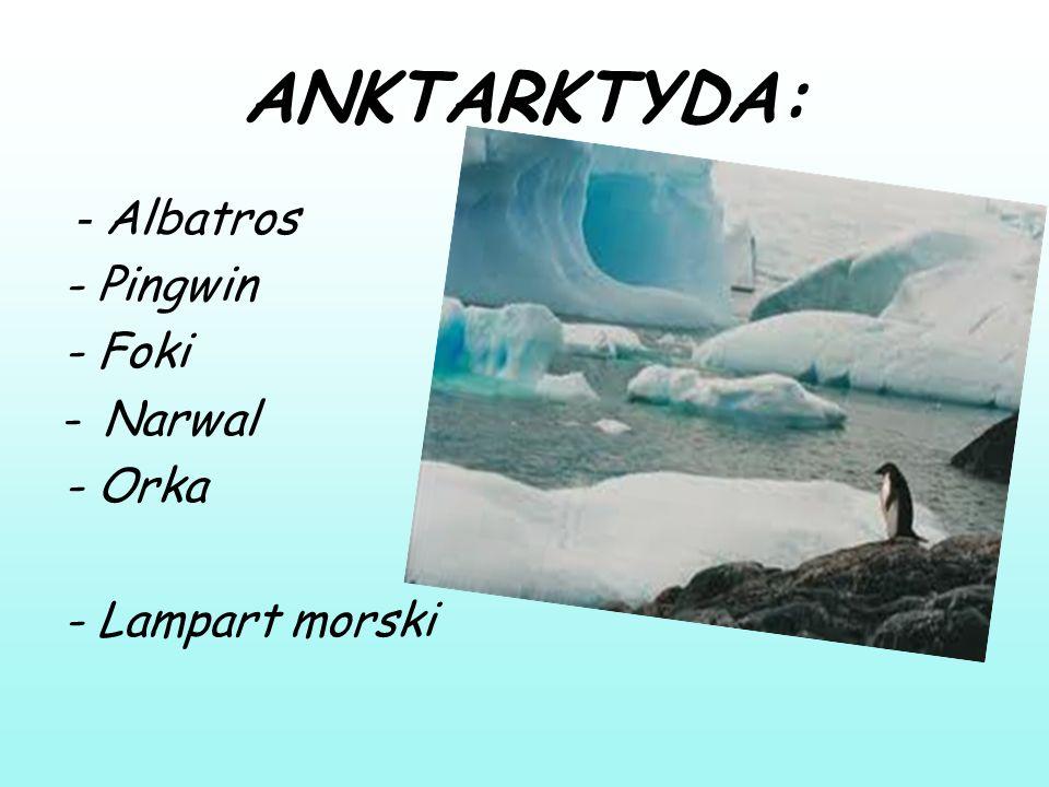 ANKTARKTYDA: - Albatros - Pingwin - Foki -Narwal - Orka - Lampart morski