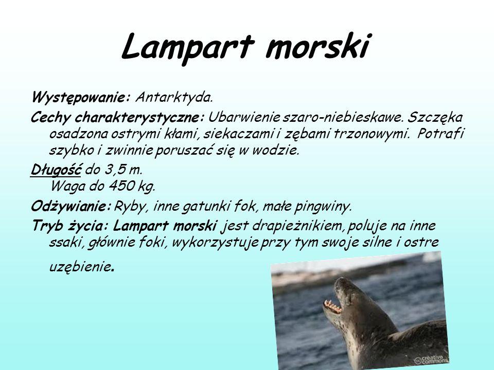 Lampart morski Występowanie: Antarktyda. Cechy charakterystyczne: Ubarwienie szaro-niebieskawe. Szczęka osadzona ostrymi kłami, siekaczami i zębami tr