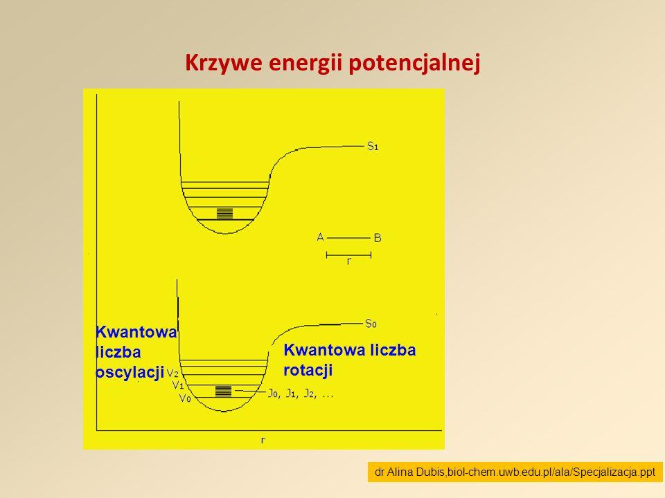 Krzywe energii potencjalnej Kwantowa liczba rotacji Kwantowa liczba oscylacji dr Alina Dubis,biol-chem.uwb.edu.pl/ala/Specjalizacja.ppt