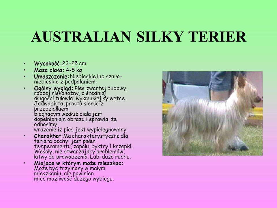 AUSTRALIAN SILKY TERIER Wysokość:23-25 cm Masa ciała: 4-5 kg Umaszczenie:Niebieskie lub szaro- niebieskie z podpalaniem. Ogólny wygląd: Pies zwartej b
