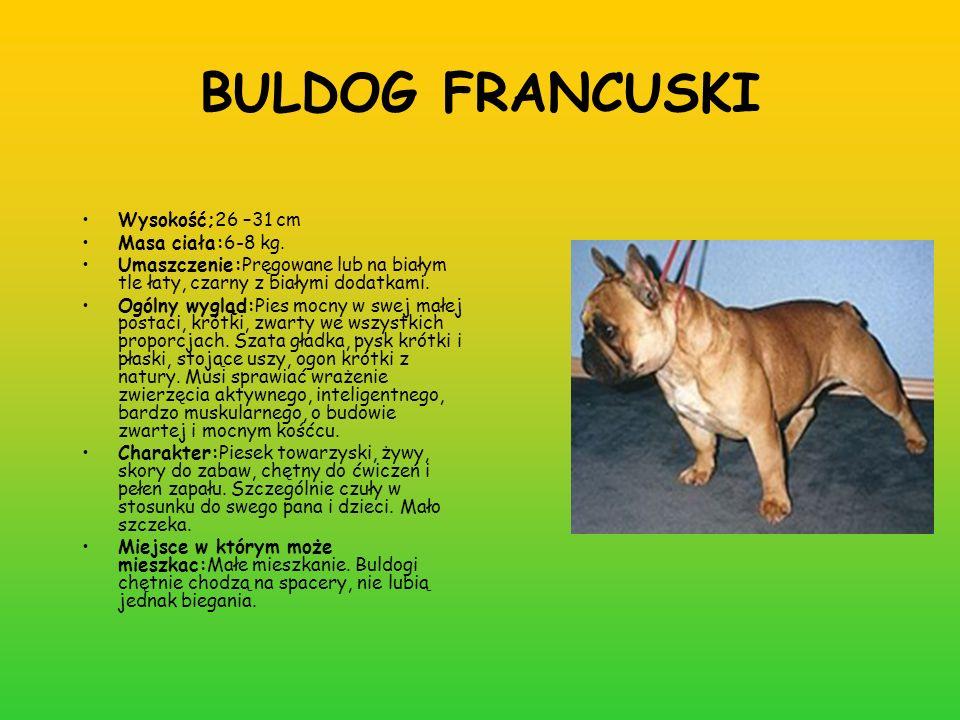 BULDOG FRANCUSKI Wysokość;26 –31 cm Masa ciała:6-8 kg. Umaszczenie:Pręgowane lub na białym tle łaty, czarny z białymi dodatkami. Ogólny wygląd:Pies mo