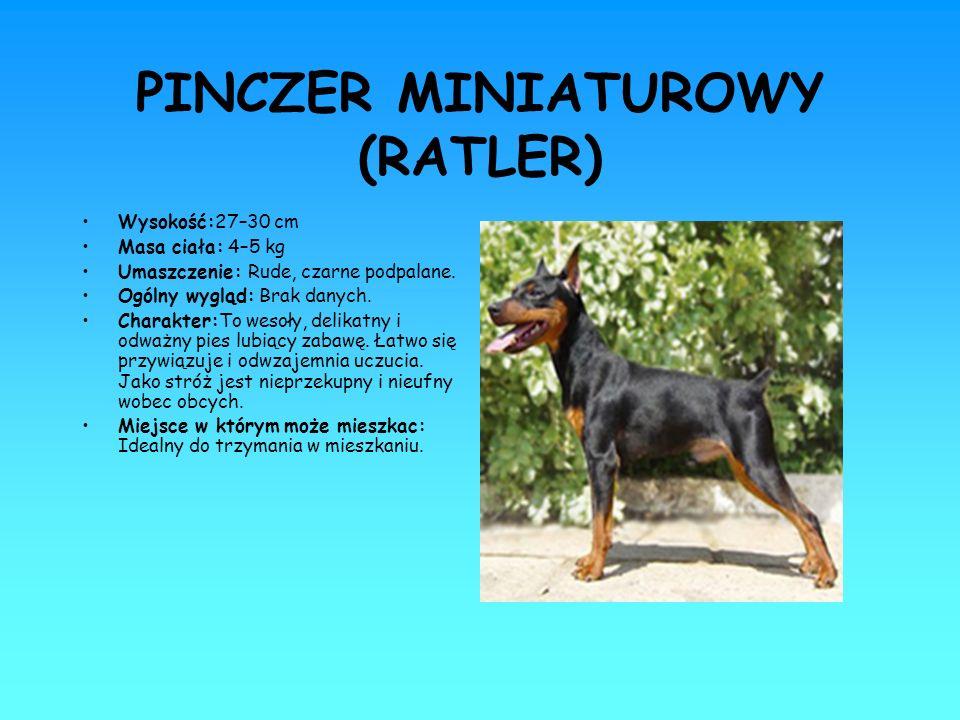 PINCZER MINIATUROWY (RATLER) Wysokość:27–30 cm Masa ciała: 4–5 kg Umaszczenie: Rude, czarne podpalane. Ogólny wygląd: Brak danych. Charakter:To wesoły