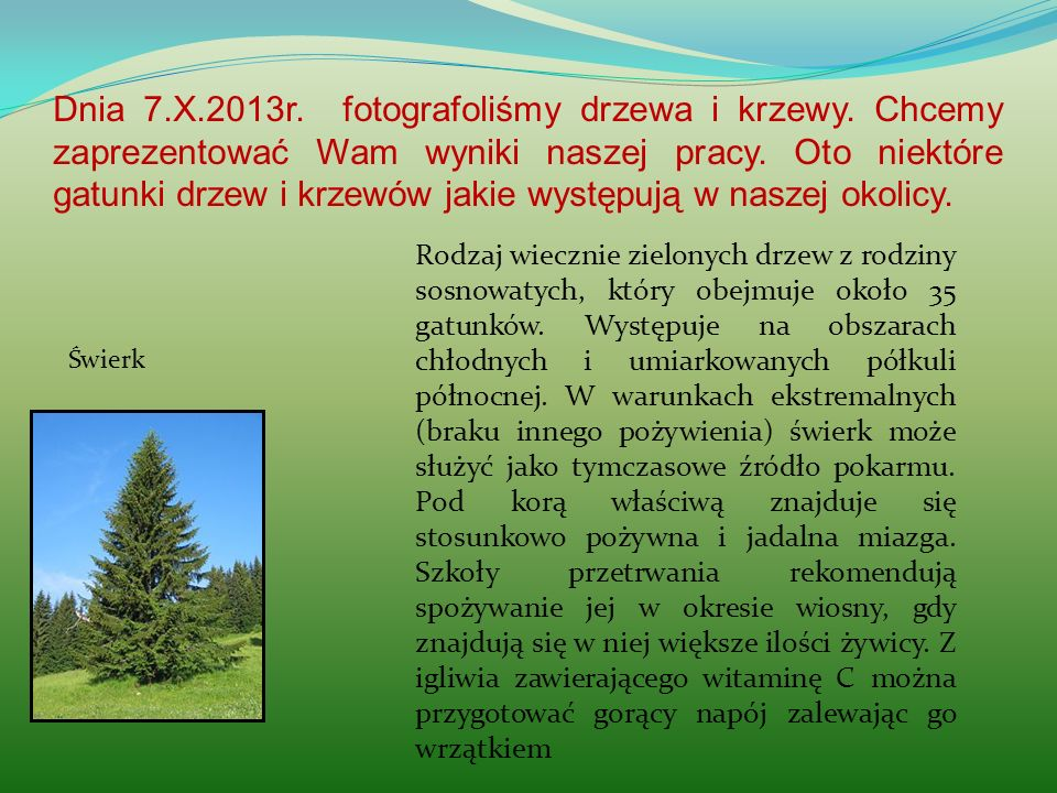 Dnia 7.X.2013r. fotografoliśmy drzewa i krzewy. Chcemy zaprezentować Wam wyniki naszej pracy. Oto niektóre gatunki drzew i krzewów jakie występują w n