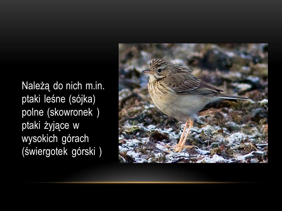 Należą do nich m.in. ptaki leśne (sójka) polne (skowronek ) ptaki żyjące w wysokich górach (świergotek górski )
