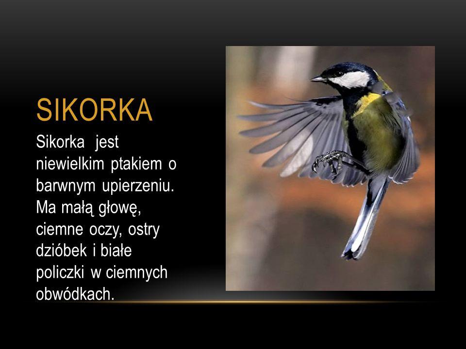 SIKORKA Sikorka jest niewielkim ptakiem o barwnym upierzeniu. Ma małą głowę, ciemne oczy, ostry dzióbek i białe policzki w ciemnych obwódkach.