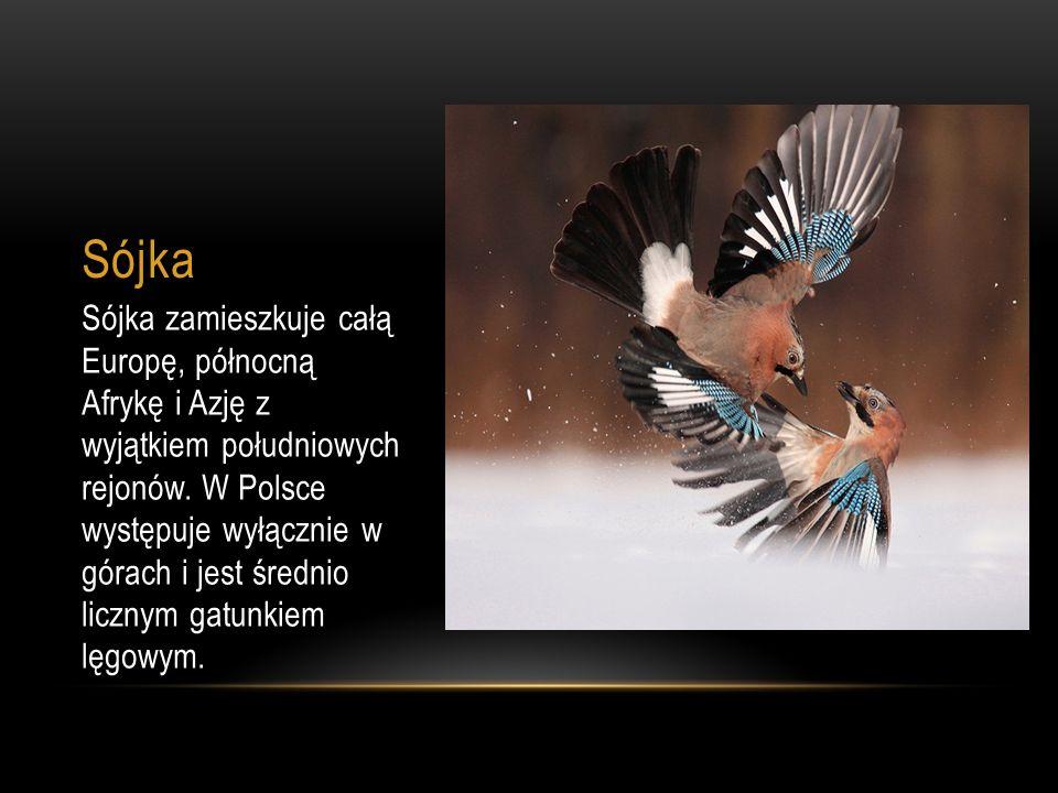 Sójka Sójka zamieszkuje całą Europę, północną Afrykę i Azję z wyjątkiem południowych rejonów. W Polsce występuje wyłącznie w górach i jest średnio lic
