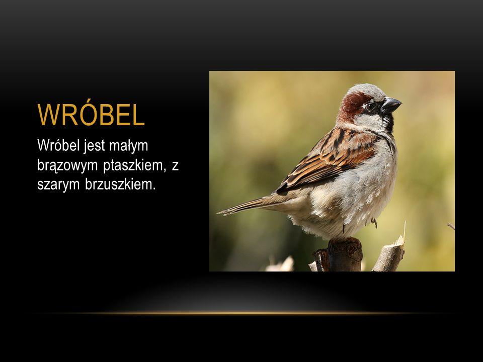 WRÓBEL Wróbel jest małym brązowym ptaszkiem, z szarym brzuszkiem.