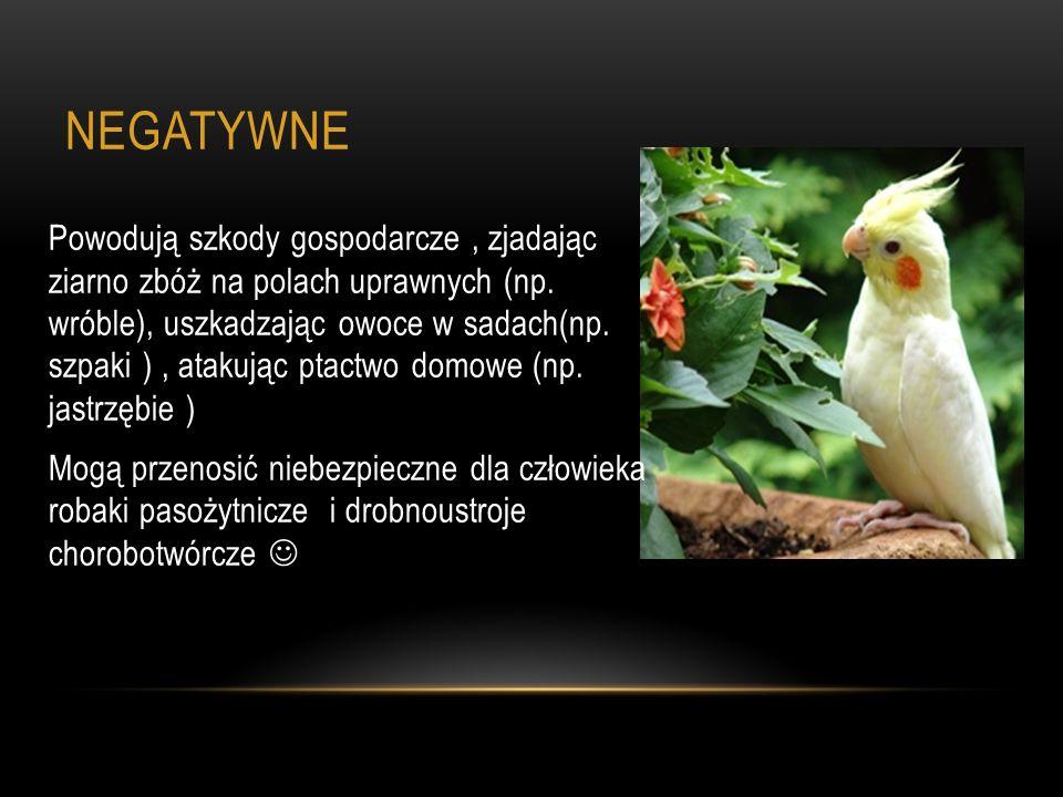 NEGATYWNE Powodują szkody gospodarcze, zjadając ziarno zbóż na polach uprawnych (np. wróble), uszkadzając owoce w sadach(np. szpaki ), atakując ptactw