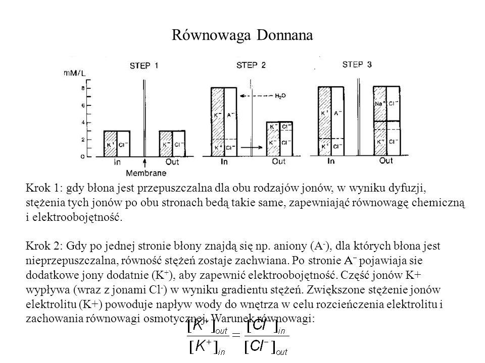 Równowaga Donnana Krok 1: gdy błona jest przepuszczalna dla obu rodzajów jonów, w wyniku dyfuzji, stężenia tych jonów po obu stronach bedą takie same, zapewniająć równowagę chemiczną i elektroobojętność.