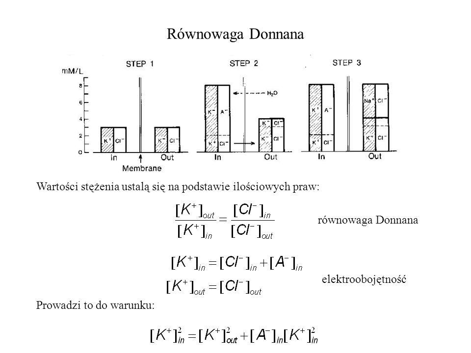 Równowaga Donnana Wartości stężenia ustalą się na podstawie ilościowych praw: równowaga Donnana elektroobojętność Prowadzi to do warunku: