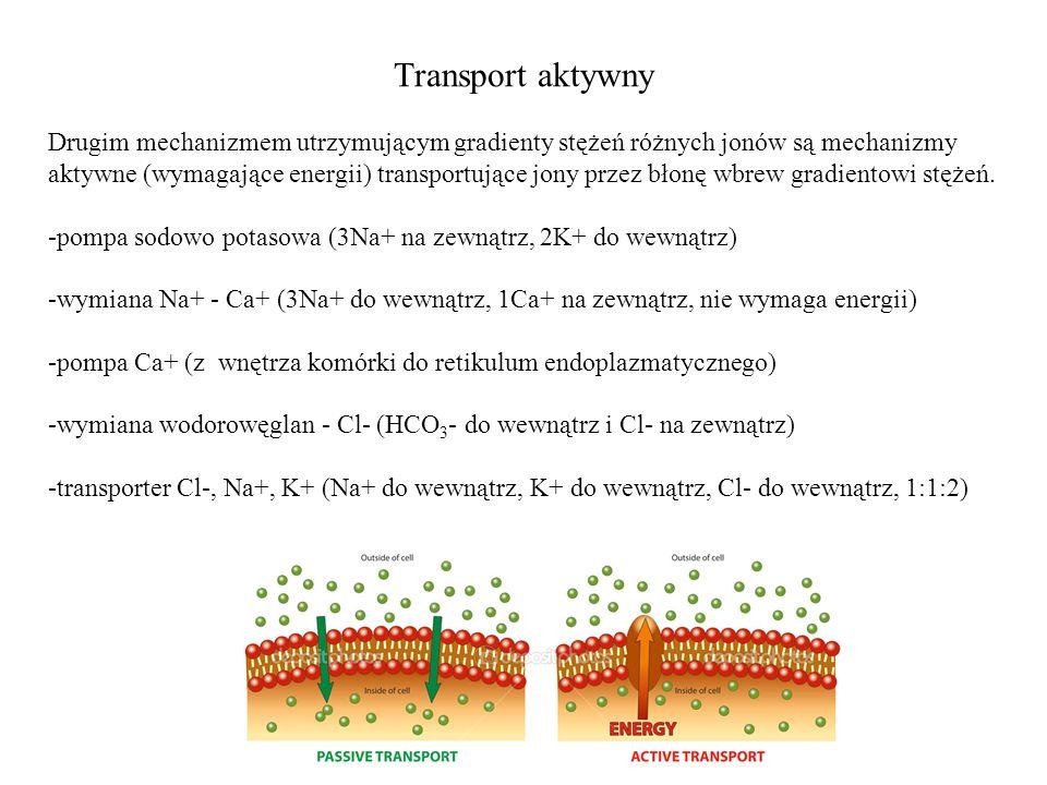 Transport aktywny Drugim mechanizmem utrzymującym gradienty stężeń różnych jonów są mechanizmy aktywne (wymagające energii) transportujące jony przez błonę wbrew gradientowi stężeń.