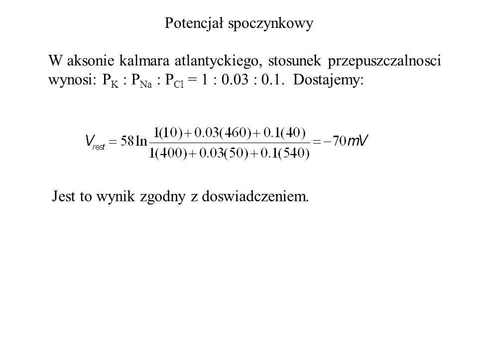 Potencjał spoczynkowy W aksonie kalmara atlantyckiego, stosunek przepuszczalnosci wynosi: P K : P Na : P Cl = 1 : 0.03 : 0.1.