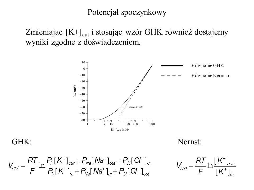 Potencjał spoczynkowy Zmieniajac [K+] out i stosując wzór GHK również dostajemy wyniki zgodne z doświadczeniem.