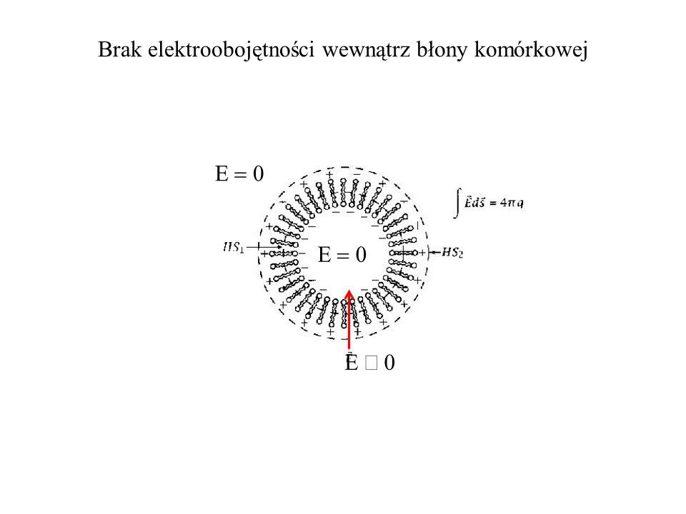 Brak elektroobojętności wewnątrz błony komórkowej